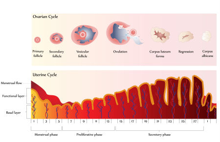 Clomid abnormal period